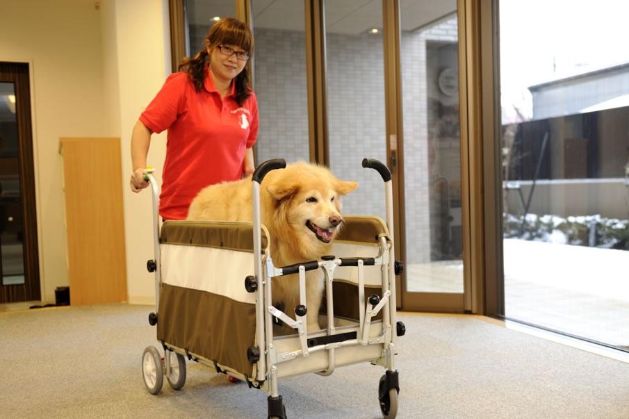 シニア犬のケア・介護の悩みやご相談を承っております。